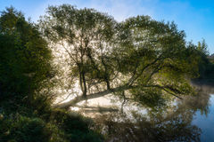 Fantastic foggy river with fresh green grass and nice reflection in the sunlight. Sun beams through tree. Dramatic colorful scenery. Pahra river, Russia Stock Image