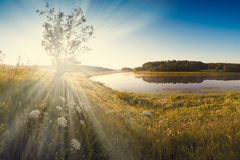 Fantastic foggy river with fresh green grass in the sunlight. Sun beams through tree Dramatic colorful scenery. Vintage style Royalty Free Stock Photos