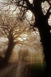 Fantastic forest with fog Stock Photo