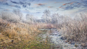 Fantastic frosty lanscape in forest Stock Image