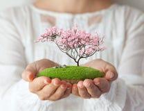 Fantastic island. Small fantastic island with pink tree in women's hands. Sakura royalty free stock photos