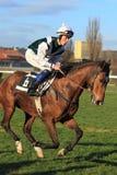 Fantastic koran - horse racing in Prague Royalty Free Stock Photography