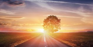 Fantastic landscape asphalt road and lonely tree at sunset. A be. Autiful orange sky Stock Photo