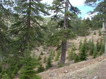 Cyprus. Troodos Mountains. Panorama of wild mountain forests at an altitude of 1900 meters above sea level. The fantastic landscape of the nature of high stock photo