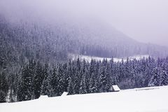 Fantastic landscape of pine forest covered with snow and fog in royalty free stock photography