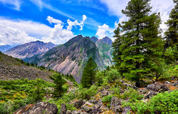 Fantastic landscape in Siberian mountains Royalty Free Stock Photos
