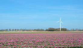 Fantastic landscape with windmills and tulip field in pastel col Stock Image