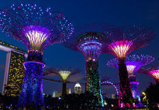 Fantastic light show in Singapore. Illuminated supertrees in The Gardens by the bay during the night show in Singapore Royalty Free Stock Photo