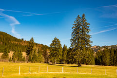 Fantastic meadow and mountain in spring - germany Stock Photos