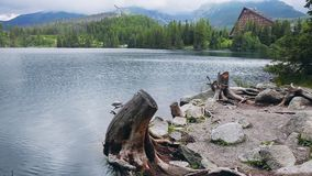 Fantastic Mountain lake in High Tatras, Slovakia. Fantastic Mountain lake Popradske Strbske Pleso in High Tatras. Slovakia, Europe. Foggy mountain range and pine stock video