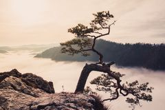 Fantastic mountain landscape, mountains are covered with trees, stock photography
