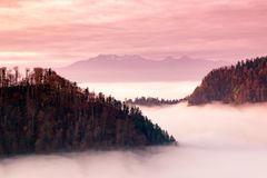 Fantastic mountain landscape, surreal pink and purple sky, the m. Ountains are covered with trees, at the bottom of the valley filled with fog Royalty Free Stock Photography