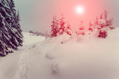 Fantastic mountains landscape glowing by sunlight. Winter with pine forest. Stock Images