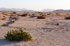 Fantastic Namibia desert landscape Royalty Free Stock Photography