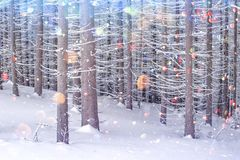 Dramatic wintry scene with snowy trees. royalty free stock photo