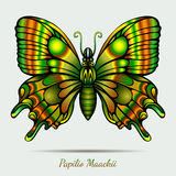 Fantastic Papilio Maackii Butterfly Stock Photo