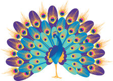Fantastic peacock Stock Images
