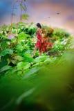 Fantastic photo manipulation illusion with a beautiful natural l Stock Photos