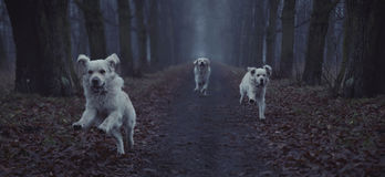 Fantastic picture of running dog Stock Image