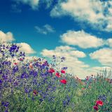 Fantastic picturesque landscape. perfect sky with clouds over the colorful meadow with meny color flowers. Rural nature landscape. instagram filter. retro stock photography