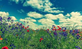 Fantastic picturesque landscape. perfect ssky with clouds over the colorful meadow with meny color flowers. Fantastic picturesque landscape. perfect sky with stock photography