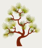 Fantastic Pine Tree Stock Photography