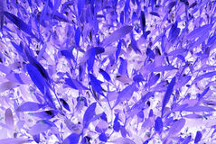 Fantastic purple plant. Abstract fantastic blue and purple colors plant as background Stock Images