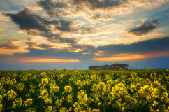 Fantastic rapeseed field at the dramatic overcast sky. Dark clouds, contrasting colors. Magnificent sunset, summer landscape. Stock Photos