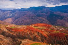 Fantastic scenery landscape, colorful wheat fields on the Red Land of Dongchuan. The sun shines down around terraced wheat fields stock photo
