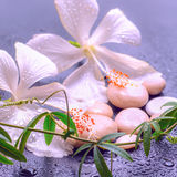 Fantastic spa concept of delicate white hibiscus, twig passionfl Royalty Free Stock Photography