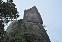 Fantastic stone. Miraculous spectacle of stone and trees Royalty Free Stock Photos