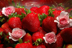 Fantastic Strawberries blossom. Bright Strawberries and rose flowers royalty free stock images