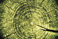 Fantastic stump texture Royalty Free Stock Photo