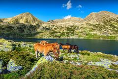 Fantastic summer alpine landscape with grazing horses, Retezat mountains, Romania. Beautiful summer landscape, horse herd in field near Bucura alpine lake. Mare royalty free stock image
