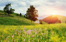 Fantastic sunset in the mountains of Ukraine. Summer field meado Royalty Free Stock Photography