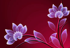 Fantastic transparent flowers Royalty Free Stock Photography