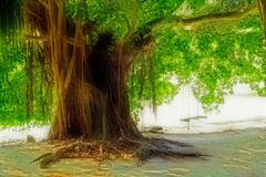 Fantastic tree Royalty Free Stock Photos