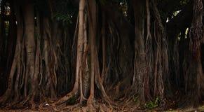 Fantastic trees. Beautiful landscape, ideal stock images