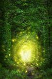 Fantastic Trees Scene - Tunnel of Love with fairy light Royalty Free Stock Photography