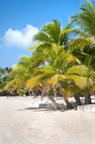 Fantastic tropical beach Stock Images