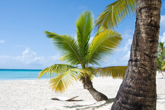 Fantastic tropical beach Royalty Free Stock Images