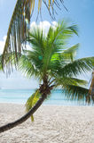 Fantastic tropical beach Royalty Free Stock Image