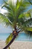 Fantastic tropical beach Royalty Free Stock Photos