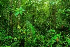 Fantastic tropical rainforest Stock Images