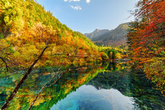 Fantastic view of fall woods reflected in the Five Flower Lake Stock Images
