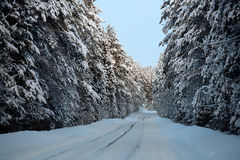 Fantastic View Of Snowy Road In Winter Forest Stock Photography