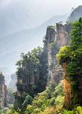 Fantastic view of trees growing on steep cliffs Avatar Rocks. Fantastic view of green trees growing on steep cliffs in the Tianzi Mountains Avatar Mountains, the stock images