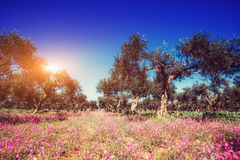 Fantastic views of the garden with blue sky. Mediterranean clima. Te. Gorgeous and picturesque scene. Location Sicily island, Italy, Europe Royalty Free Stock Image