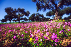 Fantastic views of the garden with blue sky. Mediterranean clima. Te. Gorgeous and picturesque scene. Location Sicily island, Italy, Europe Royalty Free Stock Photo