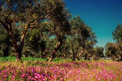 Fantastic views of the garden with blue sky. Mediterranean clima. Te. Gorgeous and picturesque scene. Location Sicily island, Italy, Europe Royalty Free Stock Images